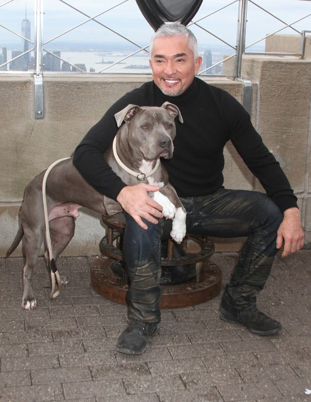 Cesar Millan To Be 'The Messenger' In Endangered Animals